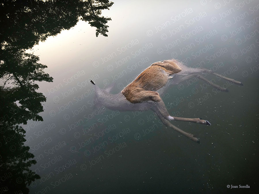 """""""The Dead Deer"""", fotografía de Joan Sorolla, ganadora en la categoría individual de LensCulture Visual Storytelling Awards 2019"""